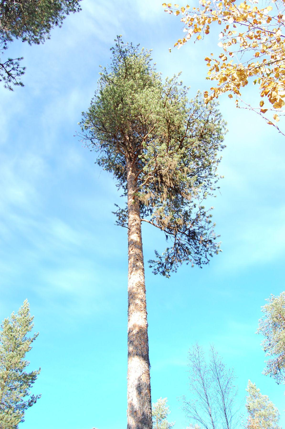 Tree #010