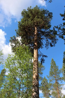 Tree #028