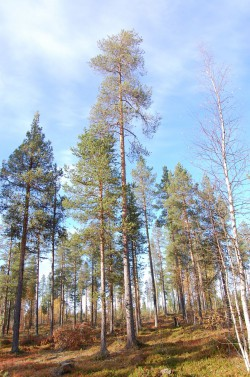 Tree #016
