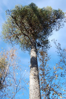 Tree #008