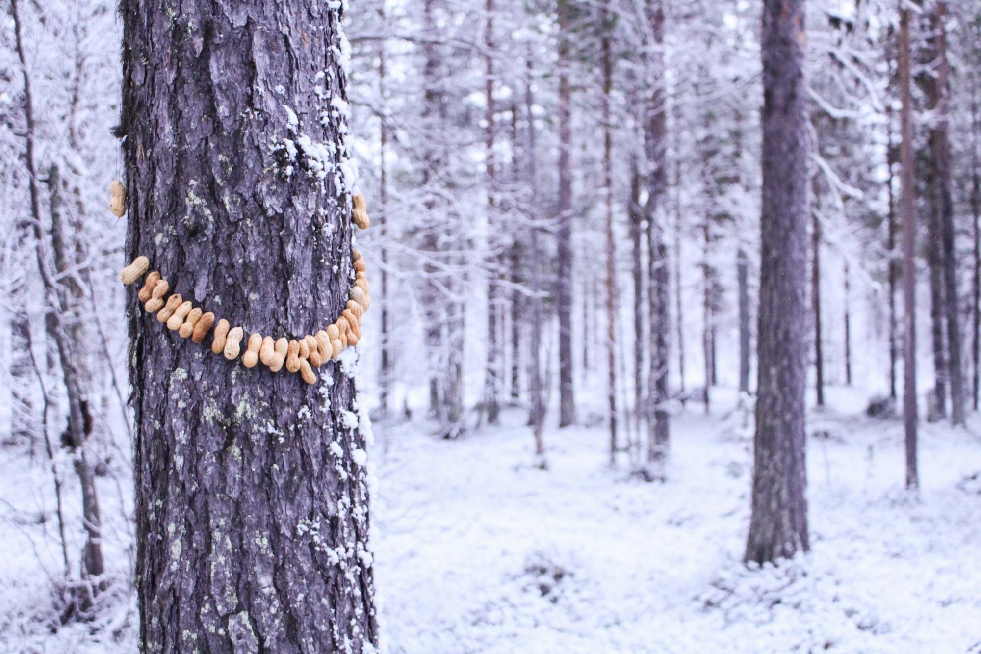 Peanut jewellery