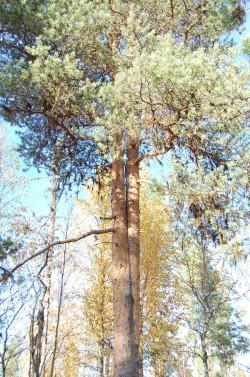 Tree #012