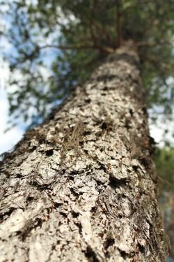 Tree #023