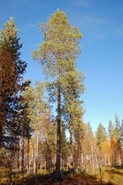 Tree #004
