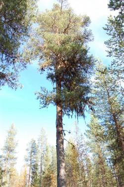 Tree #006