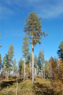 Tree #009