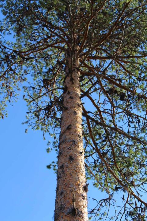 Tree #026