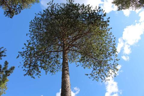 Tree #029