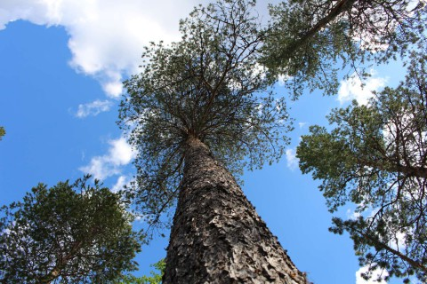 Tree #031