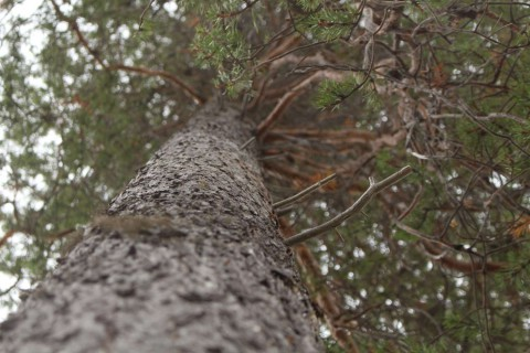 Tree #033