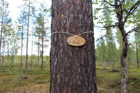 Tree #034