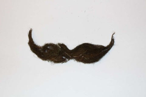 Moss mustache