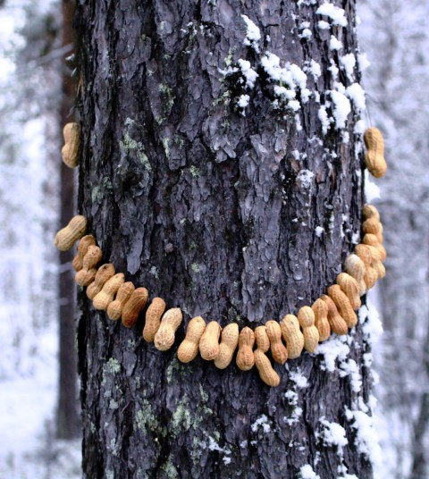 Peanut jewellery