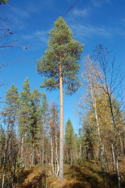 Tree #001