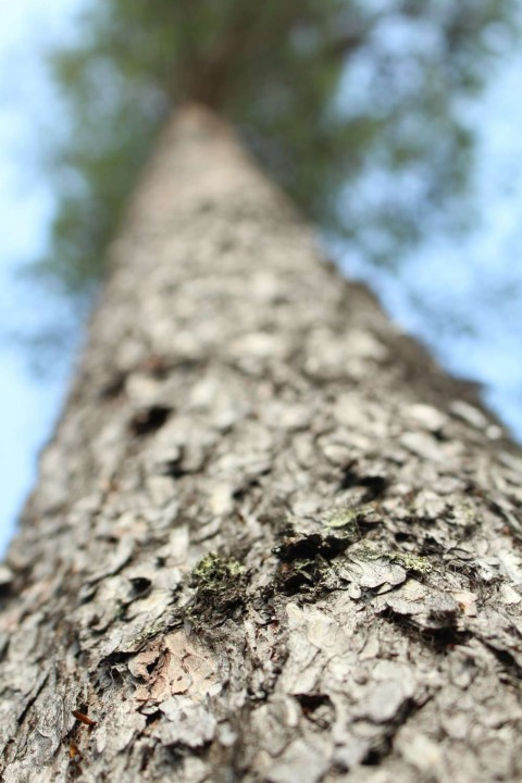 Tree #024