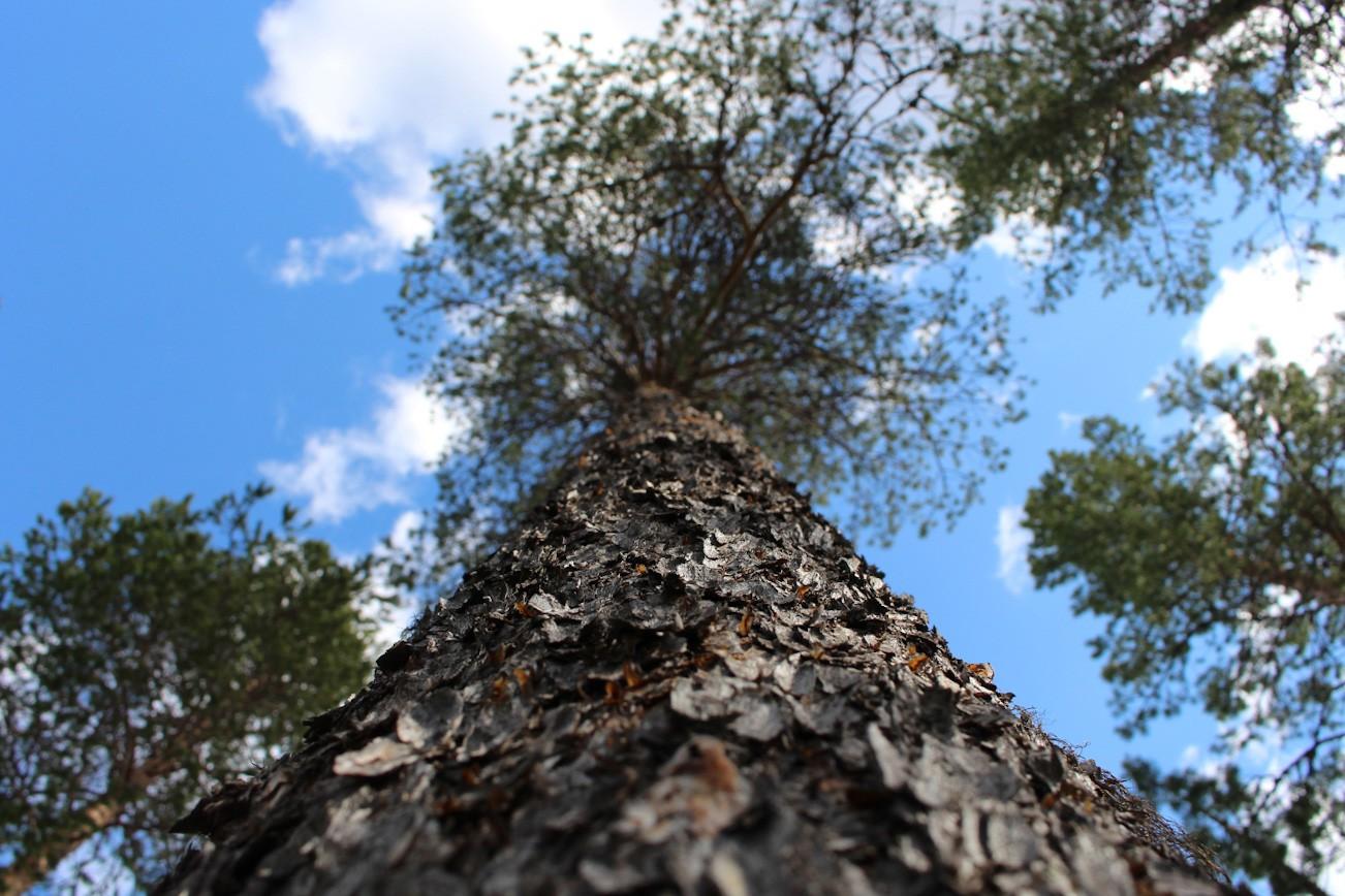 The sharing tree