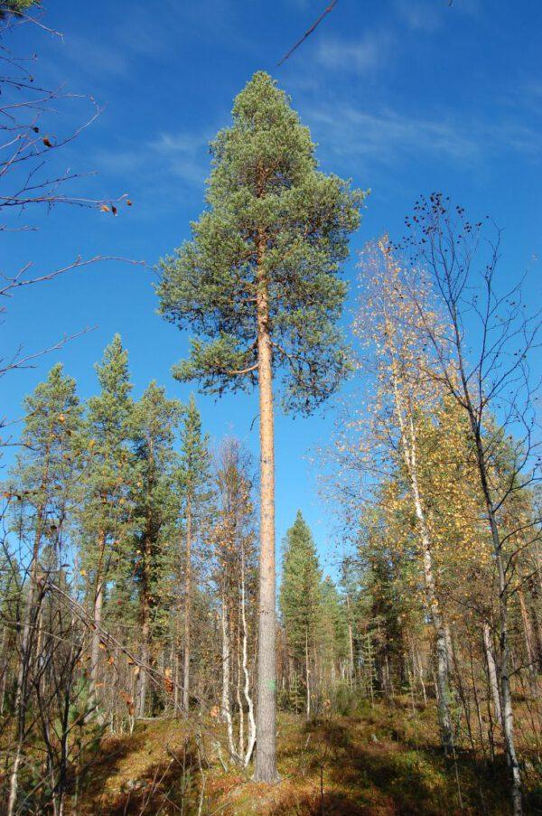 Tree #001-2835