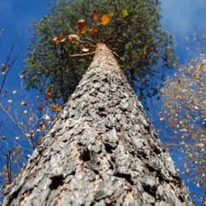 Tree #001-0