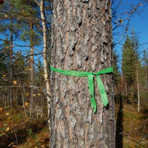 Tree #001-2839
