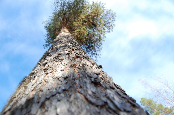 Tree #010-2881