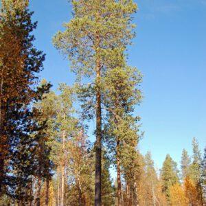 Tree #004-0