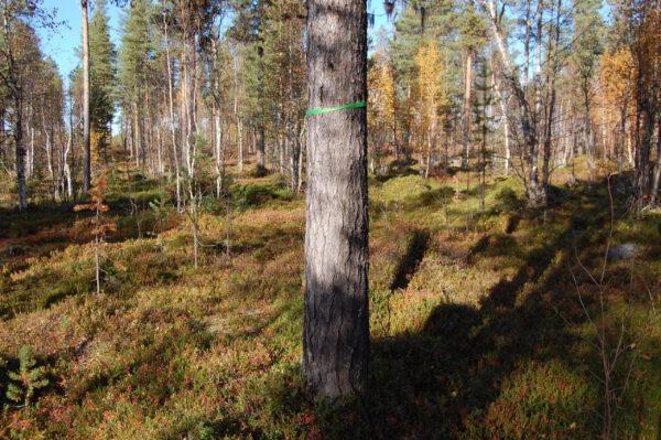Tree #005-2821