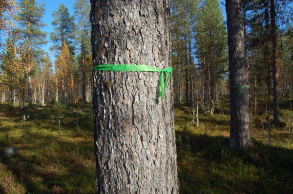 Tree #005-2822
