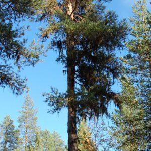 Tree #006-2855