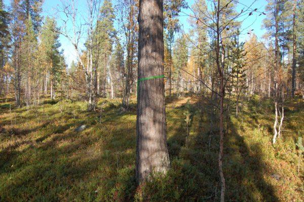 Tree #006-2853