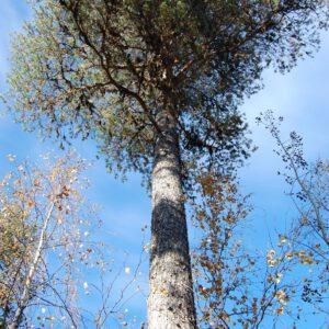Tree #008-0