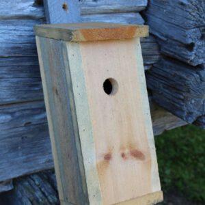 Birdhouse-2890