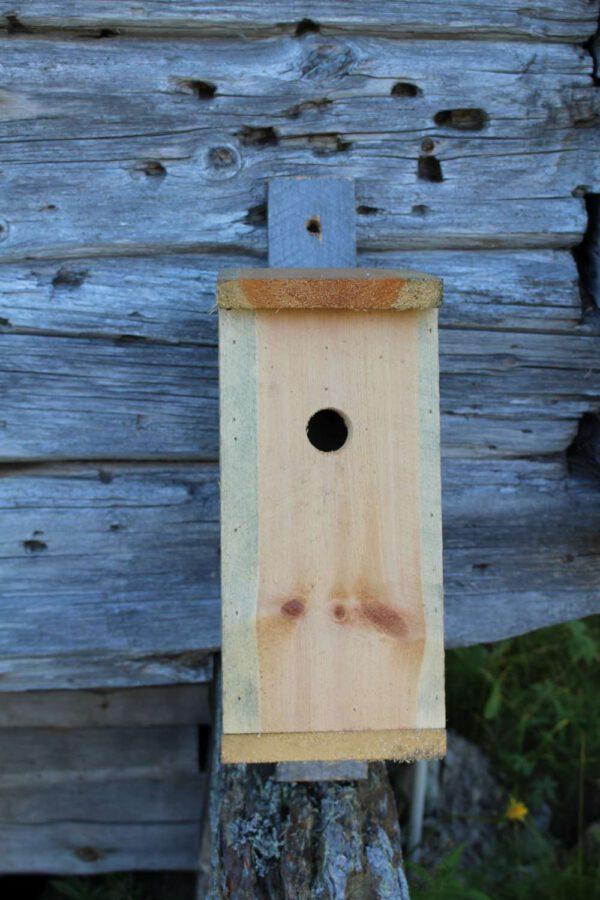 Birdhouse-2889
