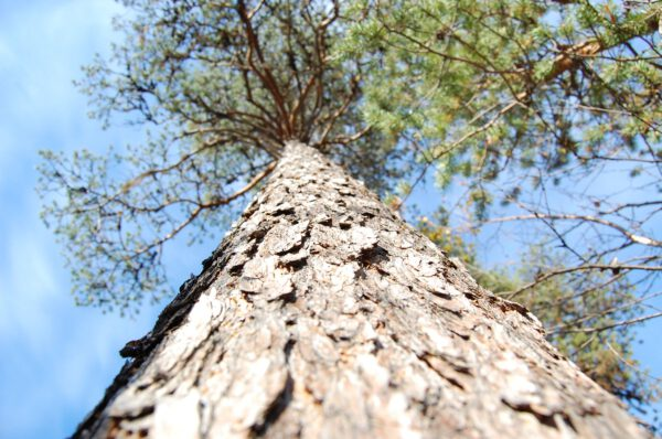 Tree #011-2895