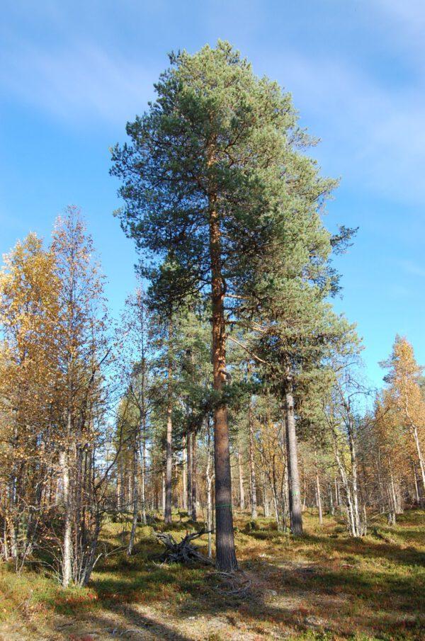 Tree #012-2900