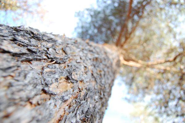 Tree #012-2903
