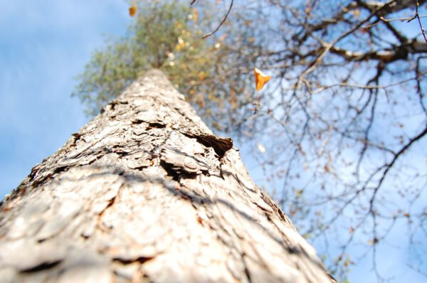 Tree #013-2912