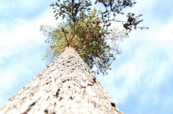 Tree #014-2917