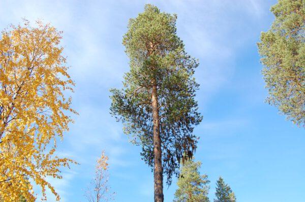 Tree #015-2925