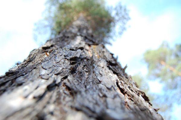 Tree #015-2927