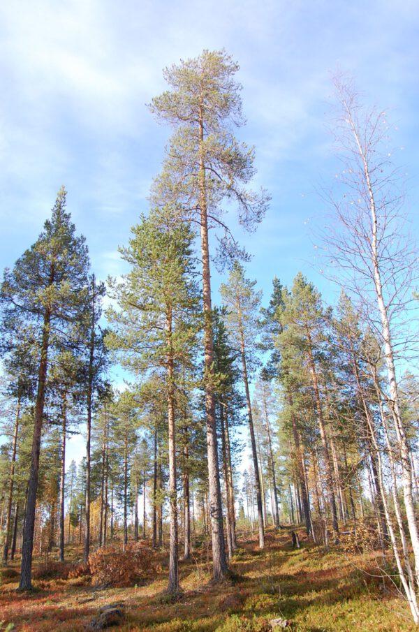 Tree #016-0