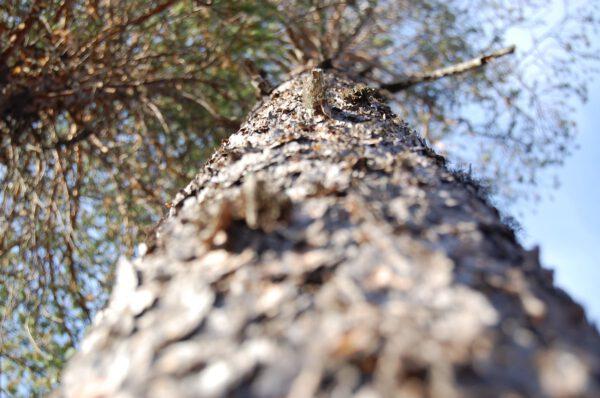 Tree #016-2936