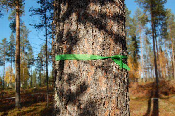 Tree #016-2933