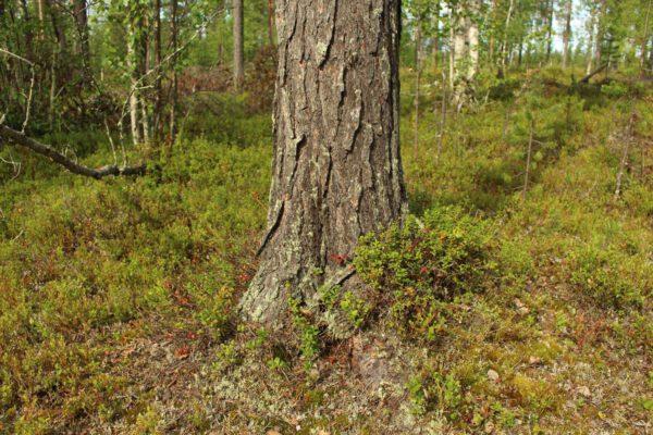 Tree #020-2967