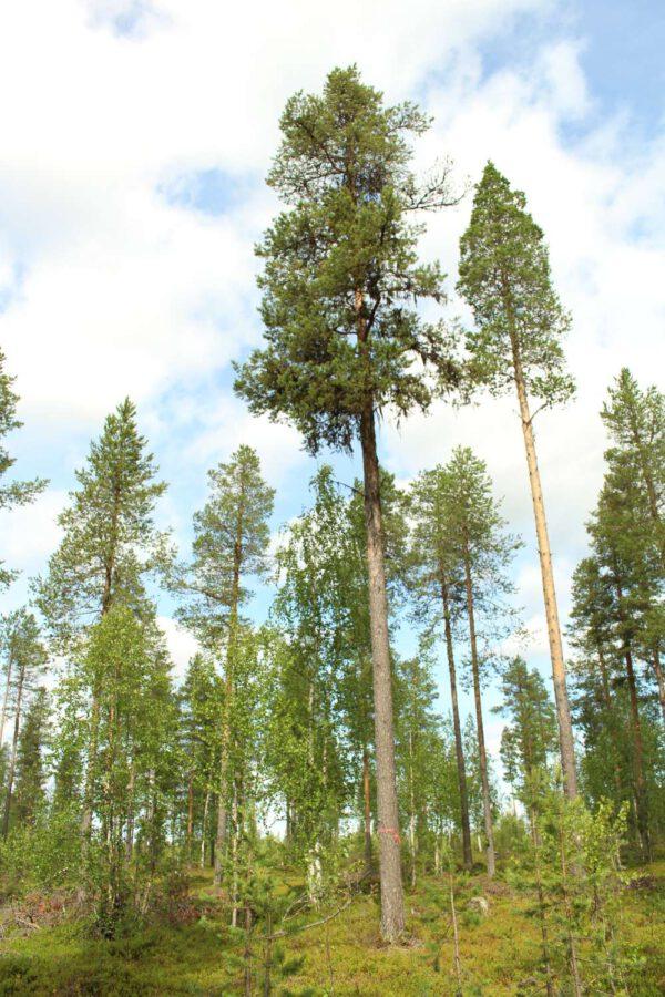 Tree #020-2966