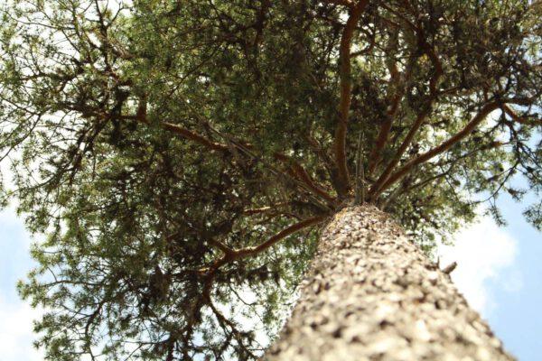 Tree #020-0