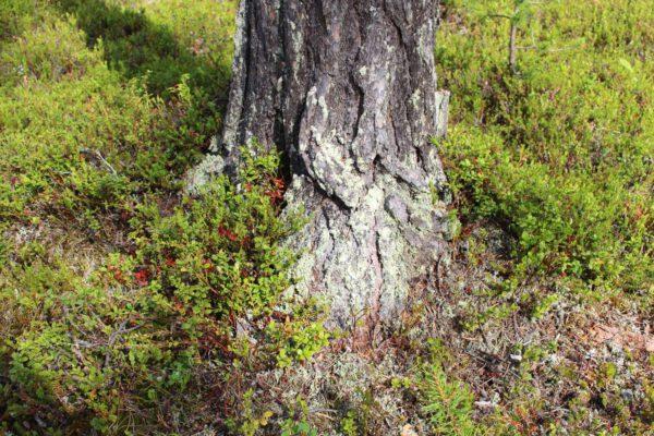 Tree #021-2984