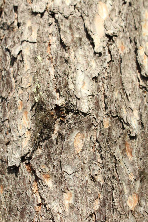 Tree #021-2982