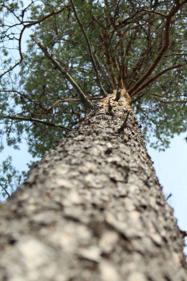 Tree #021-0