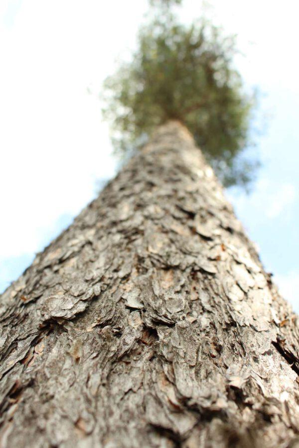 Tree #022-0