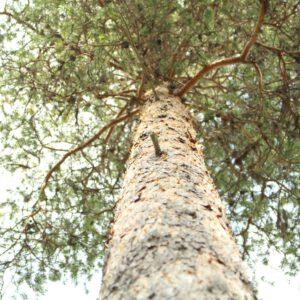 Tree #022-2996